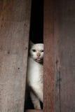 Bangkok  wild cat living in the street.  Stock Images