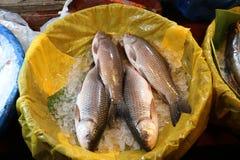 Bangladeschische frische Fische im Fisch-Shop für Verkauf Stockbild