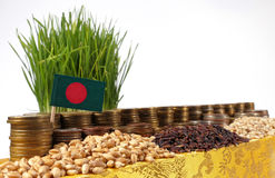 Bangladesh flag waving with stack of money coins and piles of seeds Stock Photography