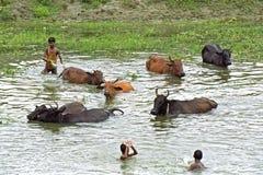 Bangladeshi kids and animals bathe collectively in lake Stock Photos