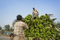 Labors are loading to pickup van on green bananas. Bangladeshi labors are stacking and loading to pickup van on green bananas for sending them to wholesale Royalty Free Stock Photos