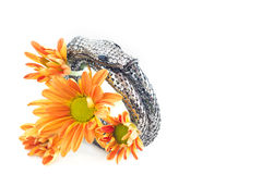 Bangle silver and crystal snake shape design on vibrant flower white background Royalty Free Stock Photos