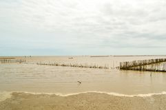 Bangpakong-Meer in Chachoengsao bei Thailand lizenzfreie stockfotos