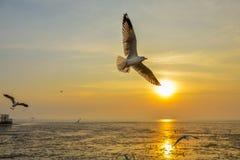 Bangpoo чайки стоковое фото rf