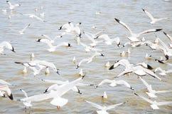 Free Bangpu, Thailand : Seagull Group Flying. Royalty Free Stock Images - 35353239