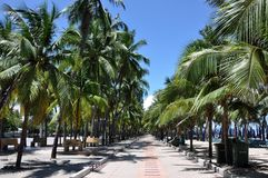Bangsaen strand Arkivbilder