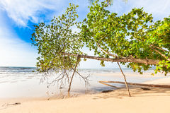 Bangsak beach in blue sky and palm trees. At Phangnga, Thailand Stock Photography