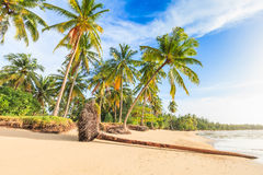 Bangsak beach in blue sky and palm trees at Phangnga, Thailand. Blue sky and palm trees gateway to white sand beach Royalty Free Stock Photo
