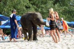 BANGTAO海滩,普吉岛,泰国- 2013年11月06日:fedding在海边亚洲的游人一头婴孩大象假期 免版税库存图片