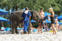 BANGTAO海滩,普吉岛,泰国- 2013年11月06日:fedding在海边亚洲的游人一头婴孩大象假期 免版税库存照片