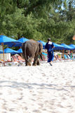 BANGTAO PHUKET, THAILAND - NOVEMBER 06, 2013: behandla som ett barn den wal elefanten Arkivfoton