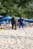BANGTAO PHUKET, THAILAND - NOVEMBER 06, 2013: behandla som ett barn elefanten som går på stranden Arkivfoto