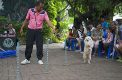 BANGUECOQUE - 2 de agosto de 2014, exposição de cães do som de Dusit no jardim zoológico de Dusit ou Ka Imagem de Stock Royalty Free