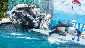 BANGUECOQUE - 31 de março: Os instrutores executam com os golfinhos na mostra Fotografia de Stock