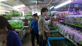 Banguecoque, Tailândia - 11 de março de 2017: Peixes do aquário no fishmarket em Jatujak ou em mercado do fim de semana de Chatuc video estoque