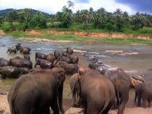Banhando elefantes Fotografia de Stock Royalty Free