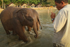 Banhando elefantes no mar no console de Ko Cang Imagem de Stock Royalty Free