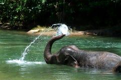 Banhando o elefante Fotos de Stock Royalty Free