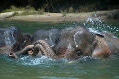 Banhando o elefante Fotografia de Stock Royalty Free