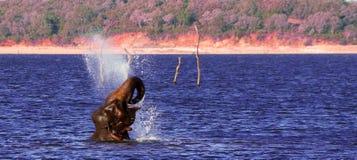 Banhando o elefante imagens de stock