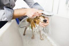 Banhando um cão bonito Fotografia de Stock Royalty Free