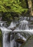 A banheira de passarinho final! imagem de stock