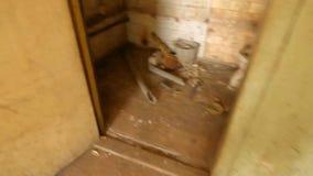 Banheiro sujo, toalete unwashed vídeos de arquivo
