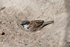Banho da areia Fotografia de Stock