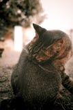 Banho da tomada do gato Foto de Stock Royalty Free
