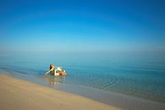 Banho de Sun Imagem de Stock