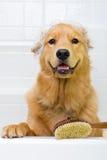 Banho do cão Fotografia de Stock