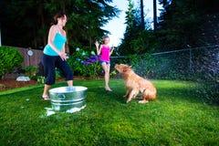 Banho do cão Imagens de Stock