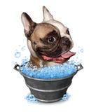 Banho do cão ilustração stock