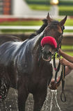 Banho do cavalo Imagens de Stock