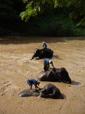 Banho do elefante Foto de Stock Royalty Free