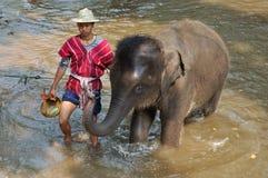 Banho do elefante Fotos de Stock Royalty Free