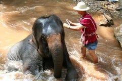 Banho do elefante Imagens de Stock