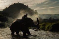 Banho do elefante Fotografia de Stock Royalty Free