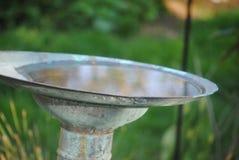 Banho do pássaro no jardim verde fotografia de stock