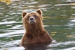 Banho do urso Imagem de Stock Royalty Free