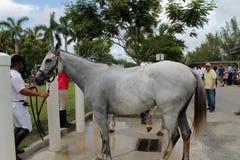 Banho dos cavalos Foto de Stock Royalty Free