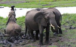 Banho dos elefantes Fotos de Stock Royalty Free