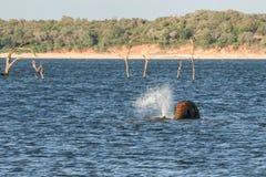 Banho selvagem do elefante fotografia de stock