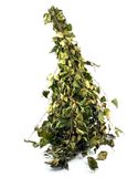 Banho verde seco do russo da vassoura de vidoeiro Fotografia de Stock Royalty Free