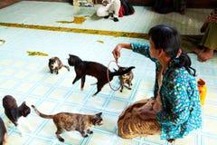 Banhoppning Cat Monastery, Myanmar Royaltyfri Foto