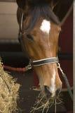 banhoppning för 033 häst Royaltyfri Fotografi