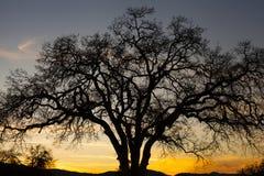 Banhoppninggrodaträd Royaltyfri Bild