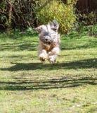 Banhoppninghund Royaltyfri Fotografi