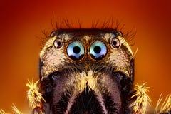 Banhoppningspindelframsida och ögon Arkivfoton