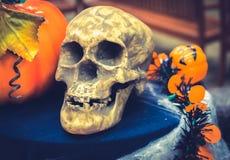 Bani głowa z czaszką Halloween Zdjęcie Stock